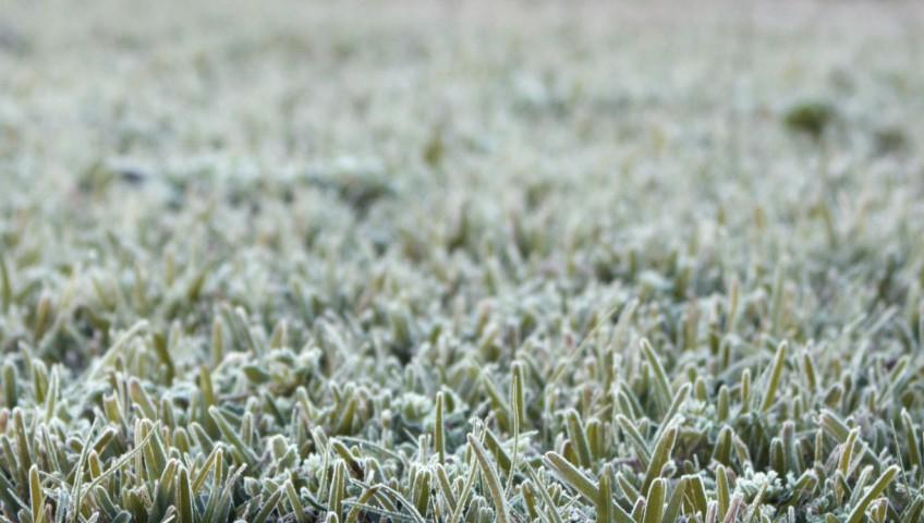 winterizing lawn
